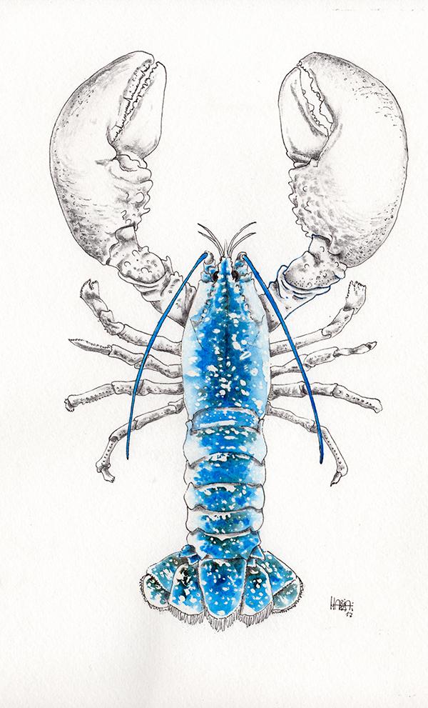 disegno di astice blu colorato a acquarello