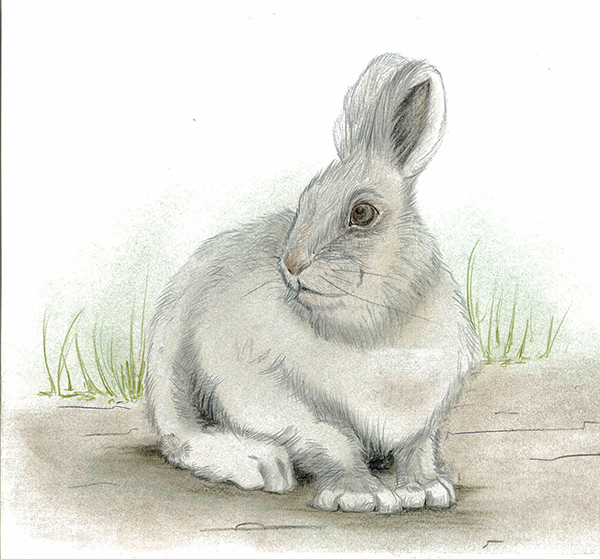 coniglietto grigio colorato con le matite